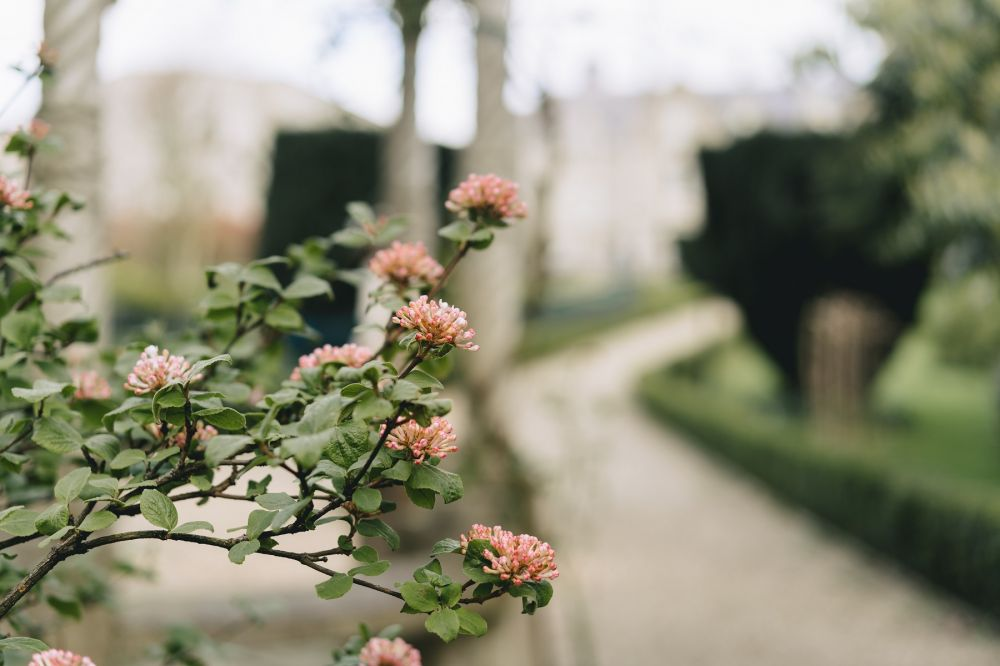 Gardens and Roses